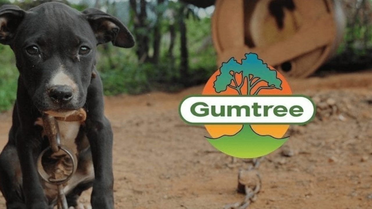 Pets Given Away For Free On Gumtree End Up Abused Killed And In Dog Fighting Rings Totally Vegan Buzz