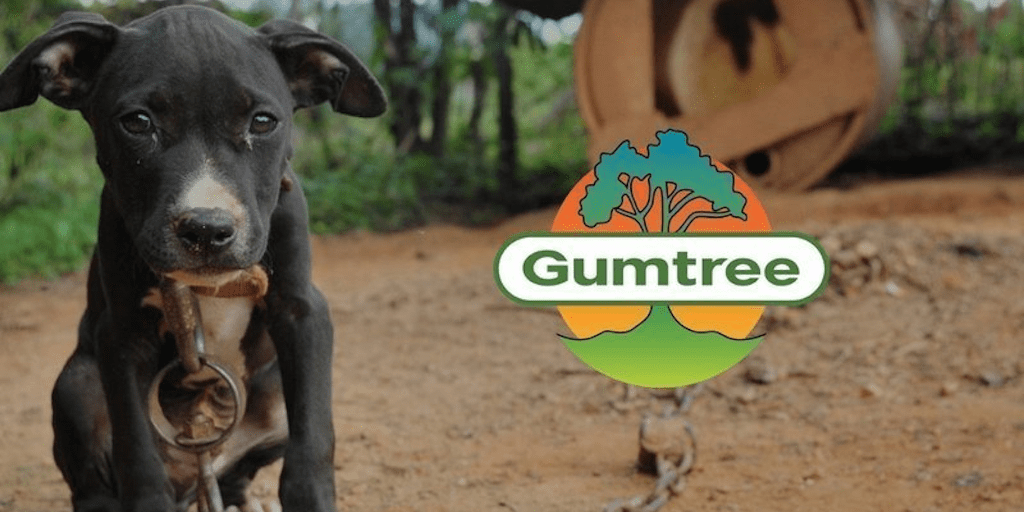 Pets given away for free on Gumtree end up abused, killed