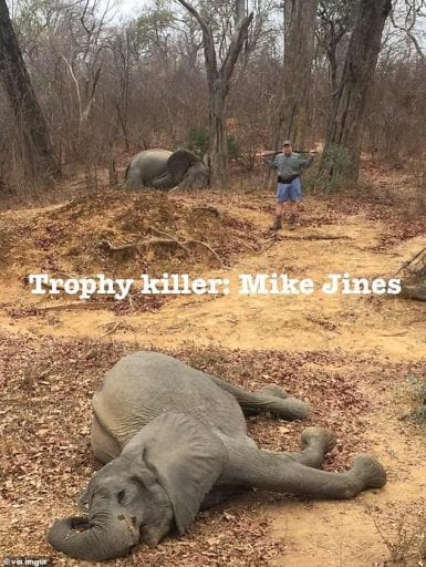 Rich businessman kills two baby elephants and poses by their corpses