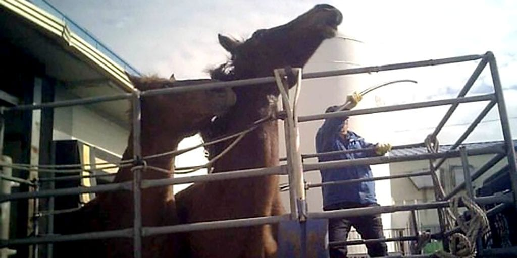 Slaughterhouse workers convicted for beating horses with a pipe