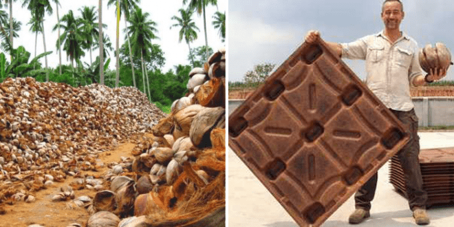Startup's new coconut wood technology to save 200 million trees a year