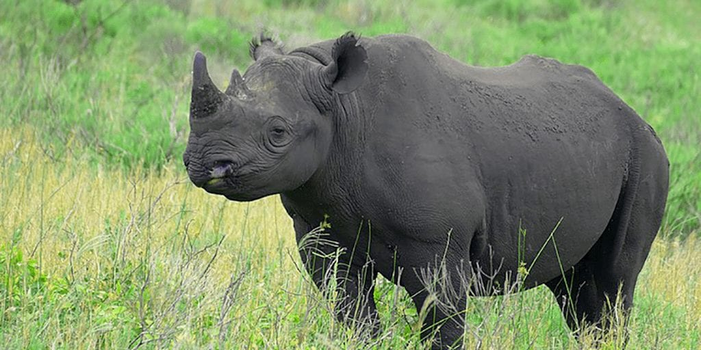 US hunter who paid $400,000 to kill rare black rhino to import its skull, skin and horns