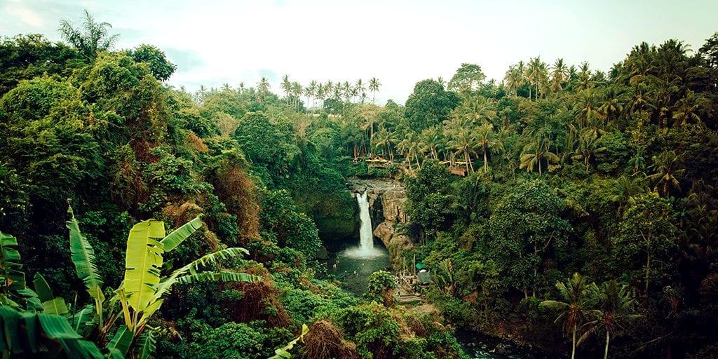 Vegan company buys 15,000 acres of the Amazon rainforest to save it