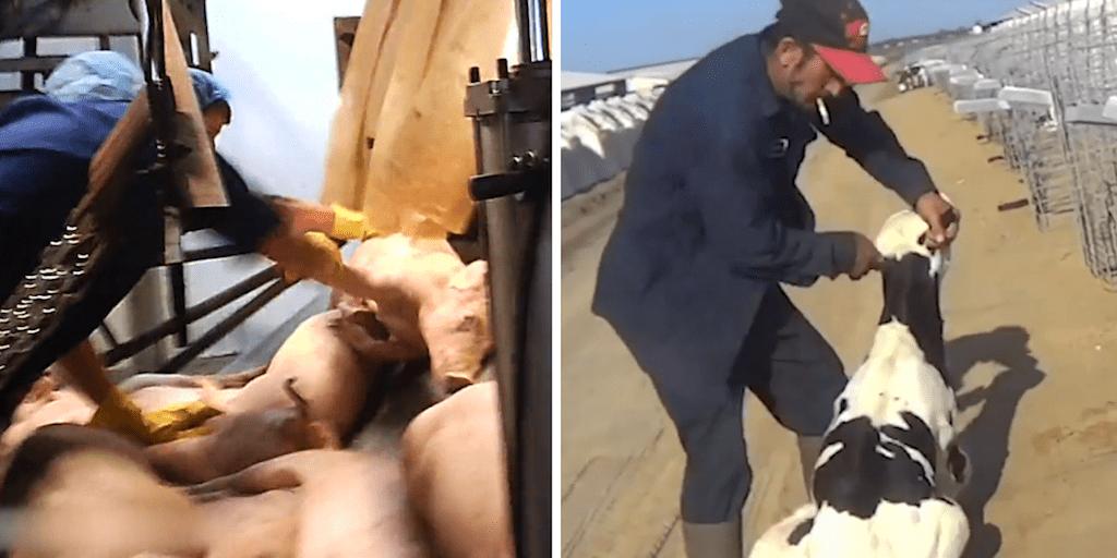 slaughterhouse imagery