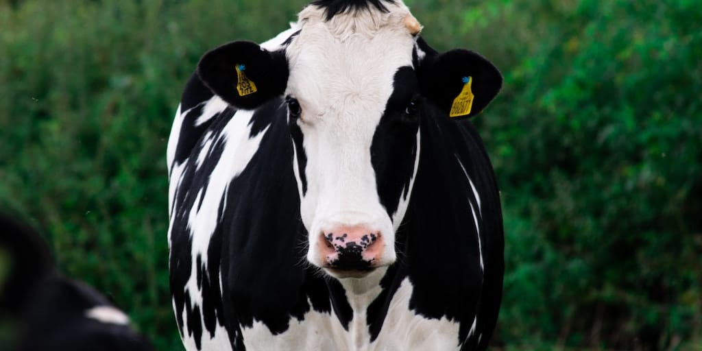 77% of meat and dairy companies refuse to discuss greenhouse gas emissions