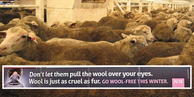 wool is just as cruel as fur PETA