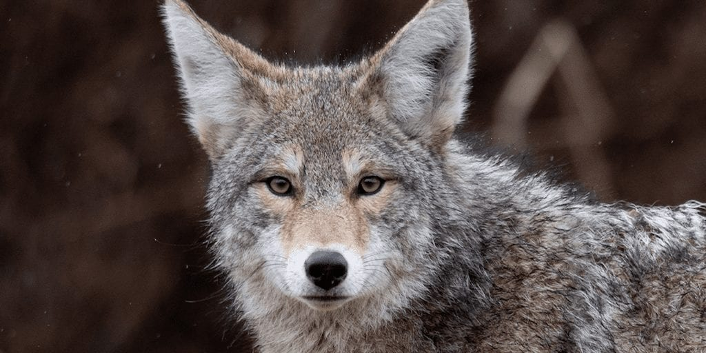 10 reasons why nobody should ever wear fur