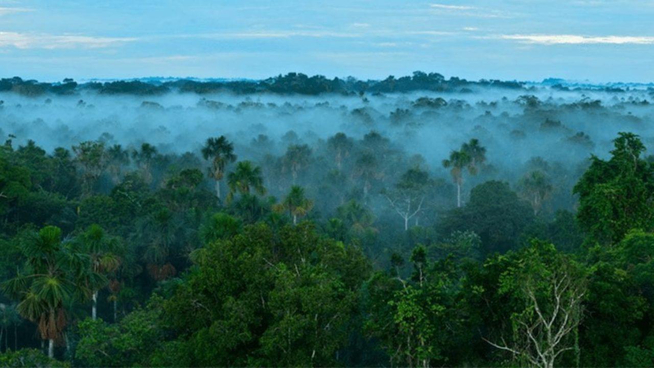 ¿Qué pasaría si talamos toda la selva amazónica?