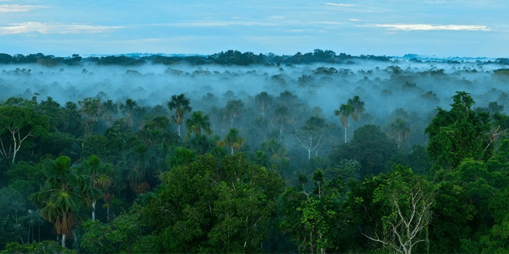 Amazon rainforest to reach 'irreversible tipping point' within two years