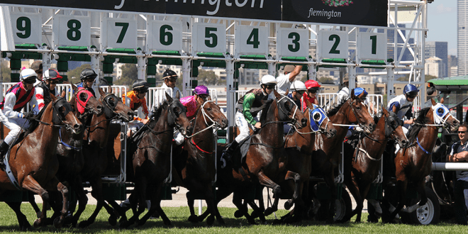 Australian slaughterhouse kills 300 retired racehorses for meat in 3 weeks