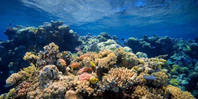 Beef production is rapidly destroying the Great Barrier Reef