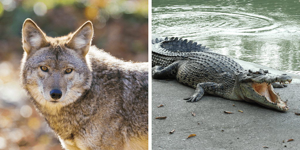 California bans exotic animal skins fur and animal circuses