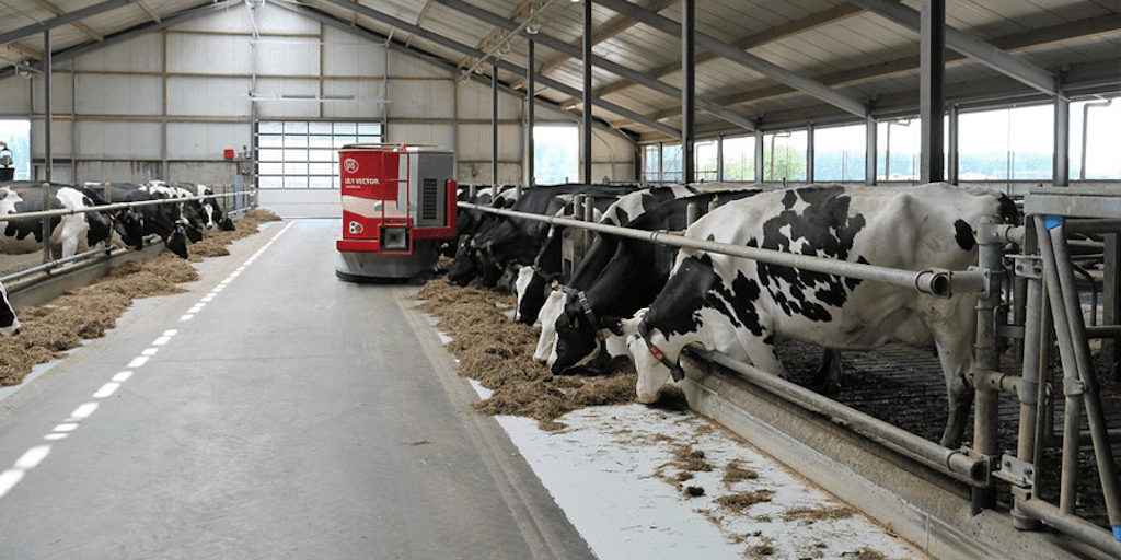 Huge dairy farm goes into administration