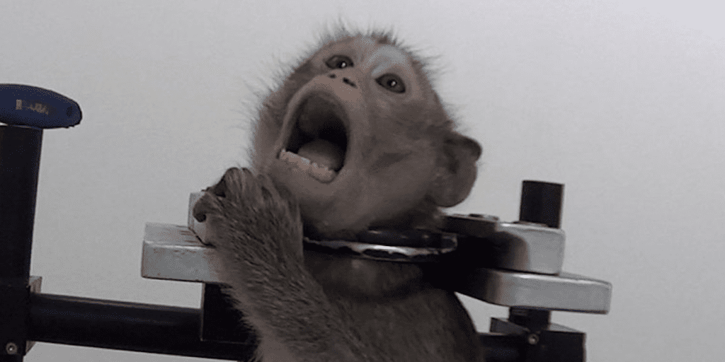 Investigation reveals monkeys screaming out in pain at German lab