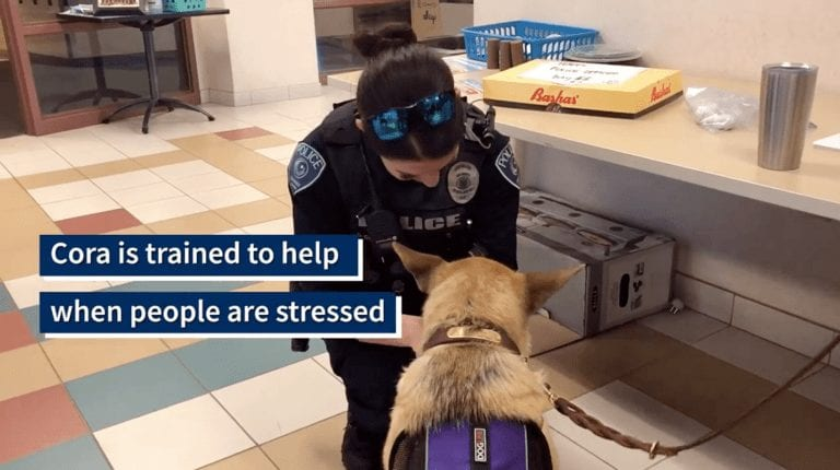 Rescue dog employed by police department as a 'therapy dog'