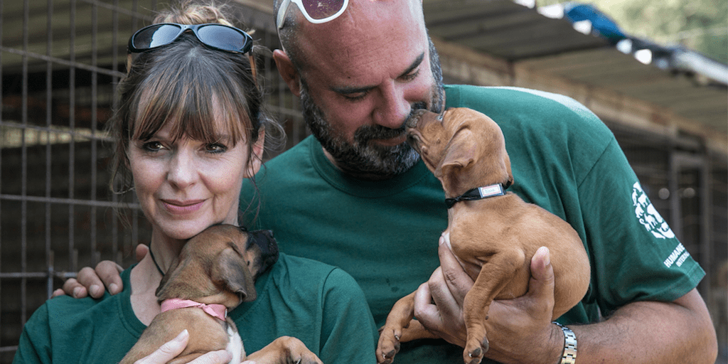 TV stars save 90 dogs set for slaughter in South Korean meat farm