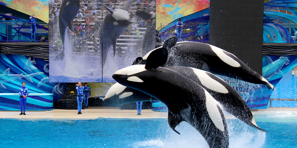 TripAdvisor will not sell SeaWorld tickets anymore