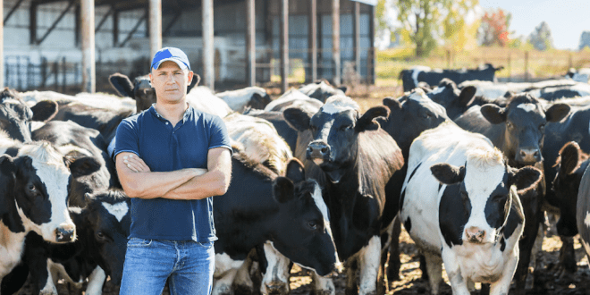 UK dairy farmers' profits drop by 50 percent in one year