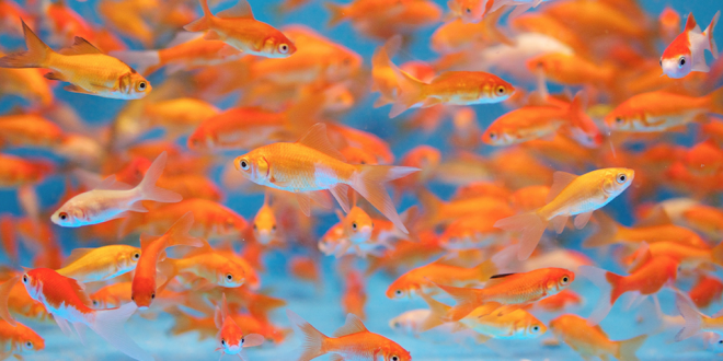 Walmart bans live fish sales