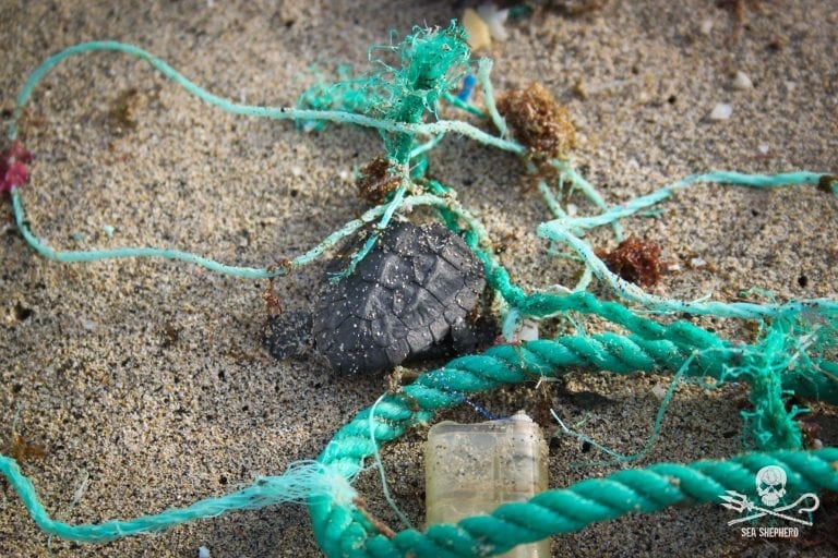 Abandoned fishing gear accounts for the vast majority of plastic rubbish wrecking marine life in the ocean