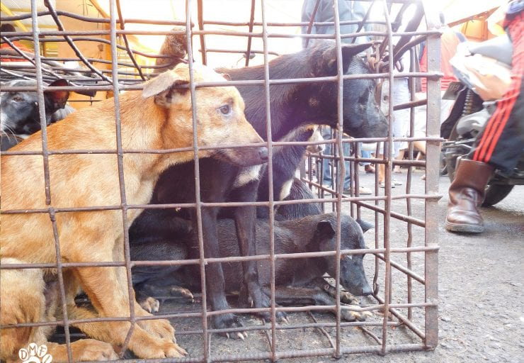 Cambodian slaughterhouse worker bursts into tears as he kills dog If I don't kill you, I can't feed my family
