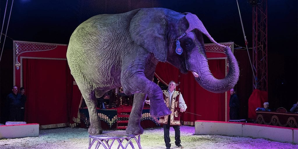 Denmark pays $1.6 million to rescue 4 circus elephants