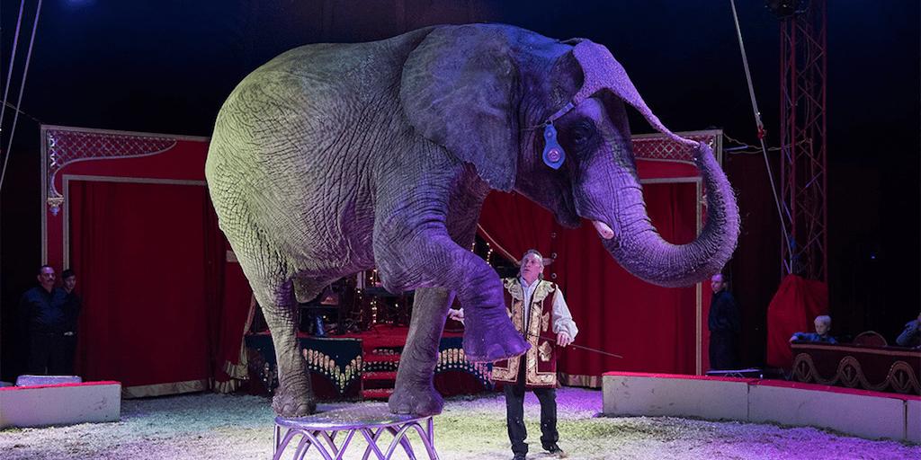 Denmark pays $1.6 million to rescue 4 circus elephants