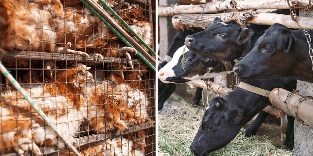 New-law-finally-makes-it-illegal-to-crush-drown-burn-or-impale-animals-but-what-about-the-meat-industry