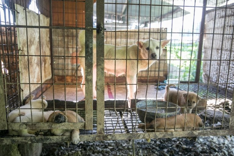 The last dog slaughterhouse in Seoul has shut down thanks to years of relentless activism
