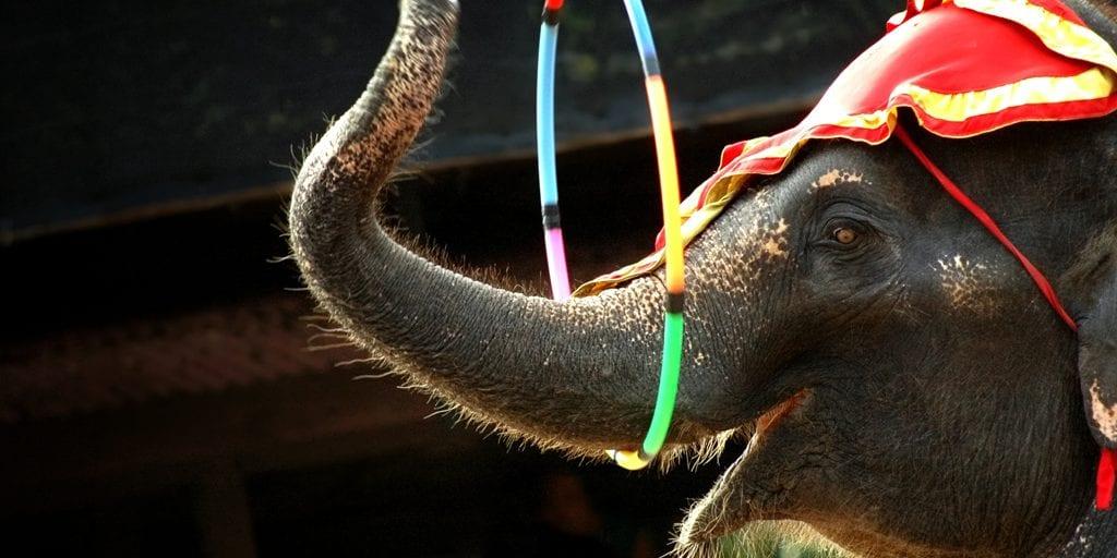 paris-bans-wild-animals-in-circuses