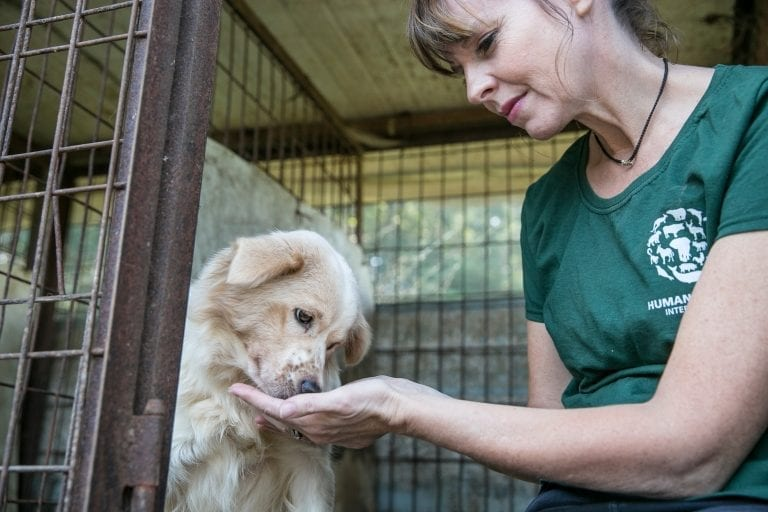 Activists close down South Korean dog meat farm and bring pups back to the UK to find new families