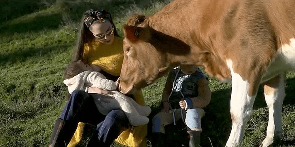 Dairy farmer switches to veganism after becoming suicidal