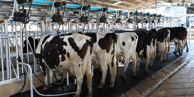 Footage reveals cows beaten and sexually abused at prominent UK dairy farm
