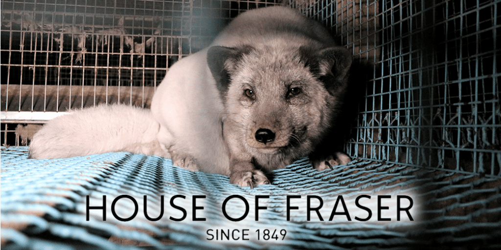 House of Fraser backtracks on decision to start selling fur following 'tsunami of public protest', fox fur farm from Humane Society International