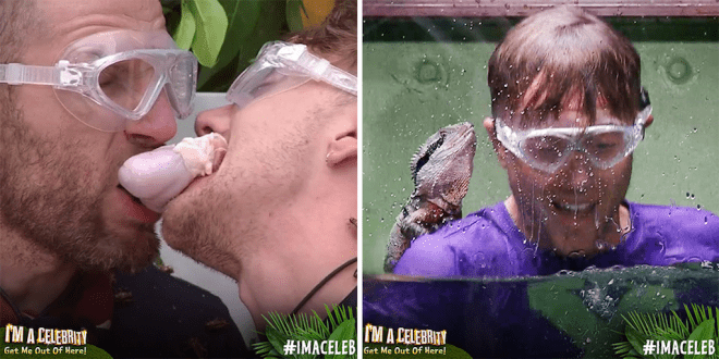 I'm a Celebrity's Bushtucker Trials STILL normalise animal abuse