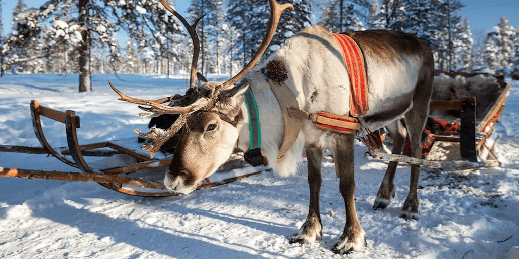 Live Reindeer at Santa's grottos could be banned next year as stress leaves animals with misshapen antlers and high mortality rates