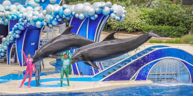 Opinion Hypocrite businesses cut ties with SeaWorld but give Disney a pass on dolphin captivity