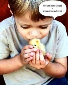 Religion talks peace veganism practices it