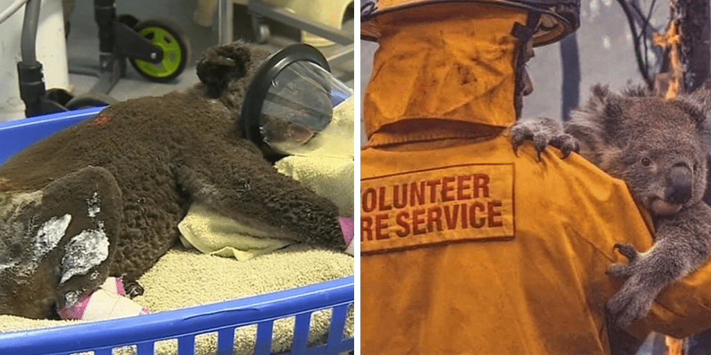 Australian village turns its post office into a rescue centre to save animals