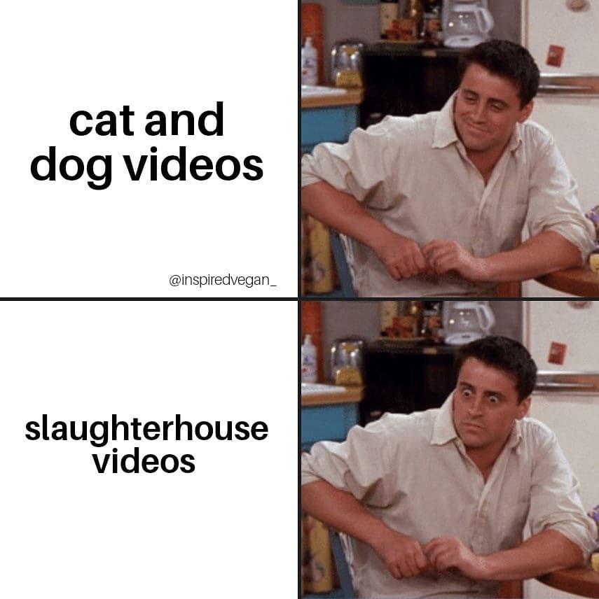Cat and dog videos vs Slaughterhouse videos