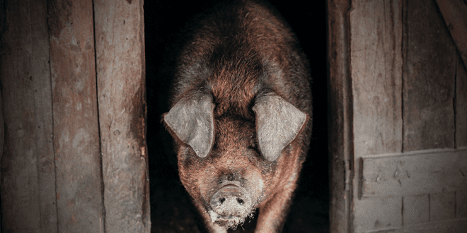 Confessions from slaughterhouse workers reveal the true horrors of the meat industry