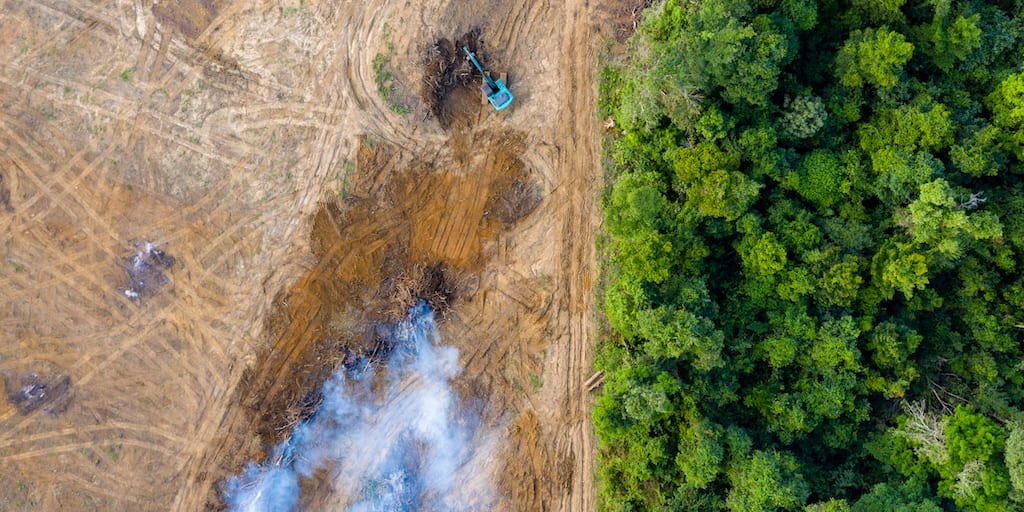 Meat eating Brits are fuelling deforestation of the Amazon