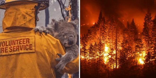 Vets forced into mass euthanisation of animals burned in Australian bushfires