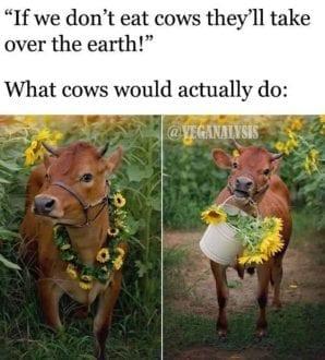 What cows actually do
