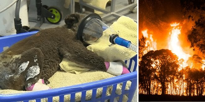 Billion Animals died Australian fires