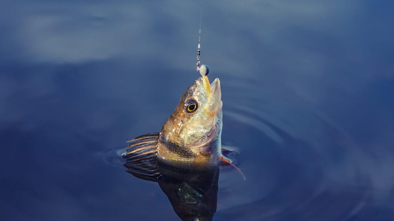 fish-hook_TotallyVeganBuzz-1280x720.jpg (1280×720)