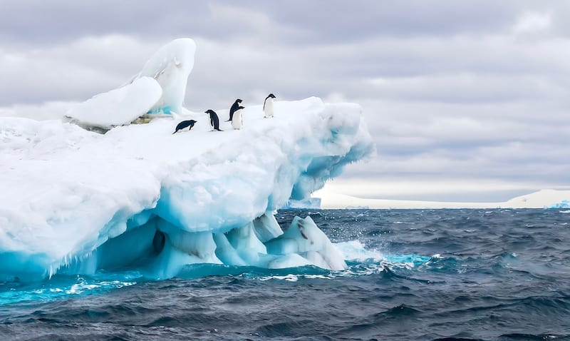 Antarctic chinstrap penguin colonies disappeared