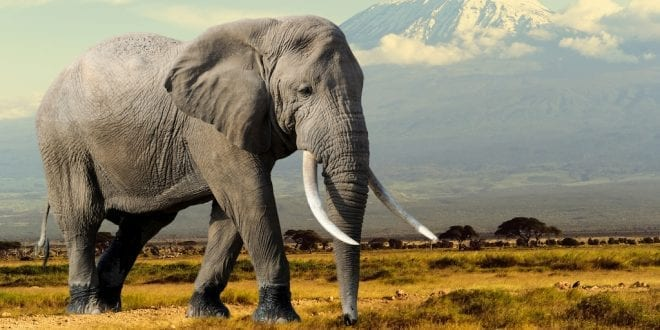 Botswana sells 60 elephant shooting permits in 'conservation disaster'