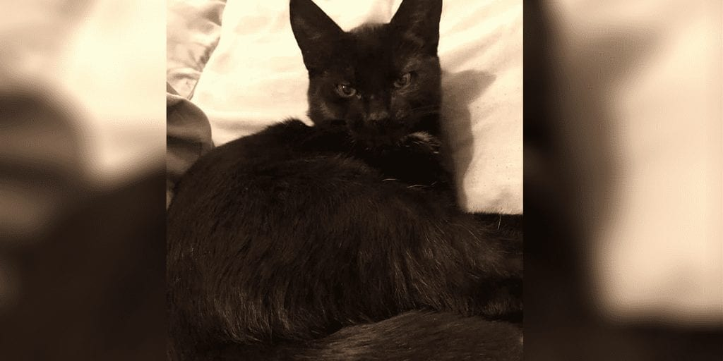 Reward offer after infamous Croydon Cat Killer 'decapitates kitten'