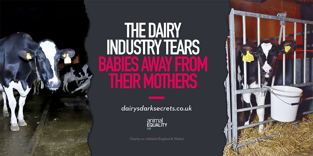 Vegan activists hijack 'Februdairy' with massive ad campaign revealing the brutality of the dairy industry